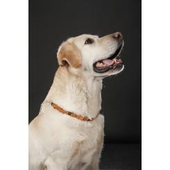 Hundehalsbånd / Dog Collars 35-38cm