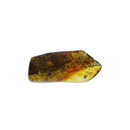 Rav med insekter / Amber with insects 0016